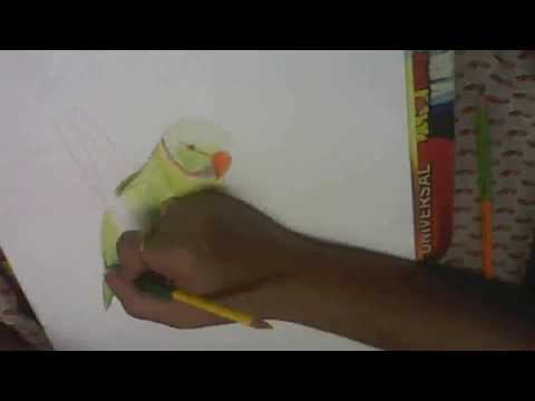 Drawing Green Parrot