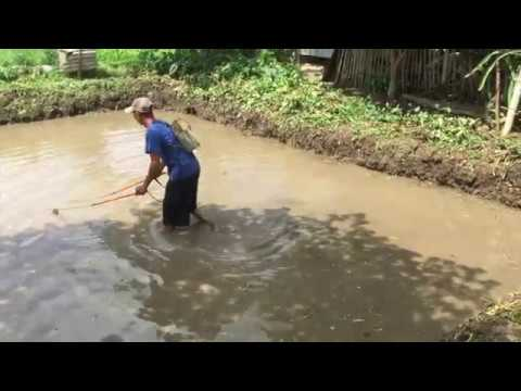 episode-2!-my-philippines-farm-life,-rice-planting,-fish-pond,-philippines-rice-field.