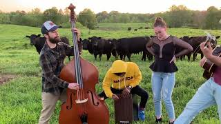 Band Playing Music In A Cow Field