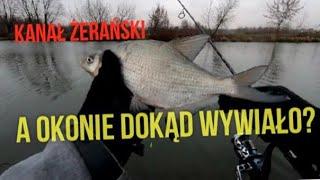 Kanał Żerański, spinning na odcinku sportowym - leszcze zamiast okoni.