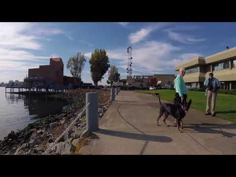 Bike Oakland: Lake Merritt to Yerba Buena Island