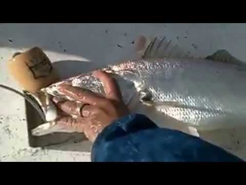 11lb Trout in Baffin Bay