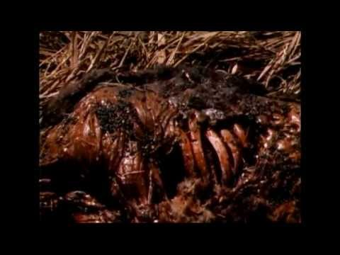 The nest(1988) death scenes