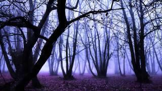 VANNESS - Purple Rain
