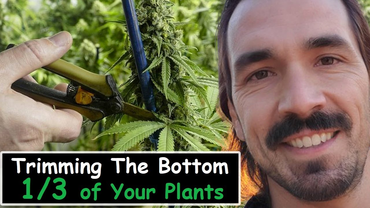 Feminized Serious Seeds A Brief Overview