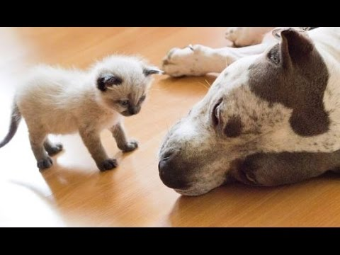 Dogs And Kittens Meet For First Time
