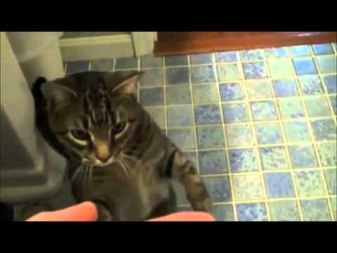 Cat does Dog Tricks !! | !! قط مدرب تدريب كلاب
