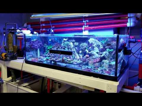 Sump System for 300+ Gallon Salt water Aquarium