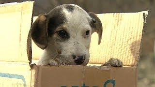 BBC Learning English: Video Words in the News: Every dog has its day (12th February 2014)