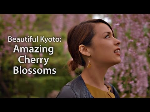 Beautiful Kyoto: Amazing Cherry Blossoms (Sakura 2015)