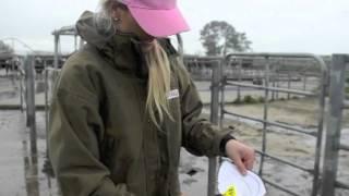 How to Use Tagtek Visual Ear Tags   Animal Identification