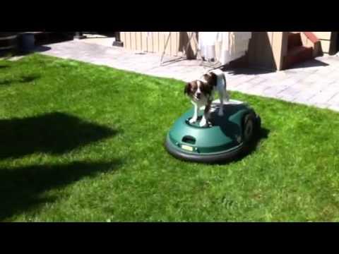 Robo Mower Dog Rides Lawnmower Youtube