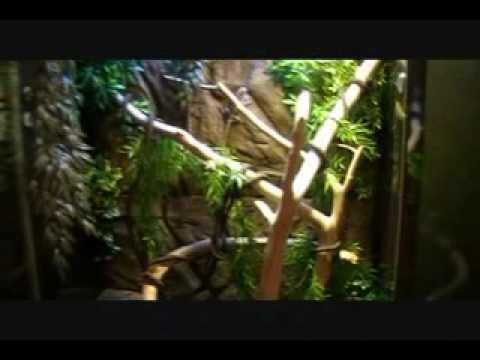 Frilled Dragon Terrarium Custom Built Youtube