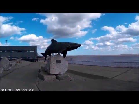 The Deep - Hull - Aquarium