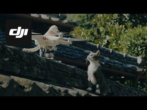 DJI Stories - Pigeon Drones