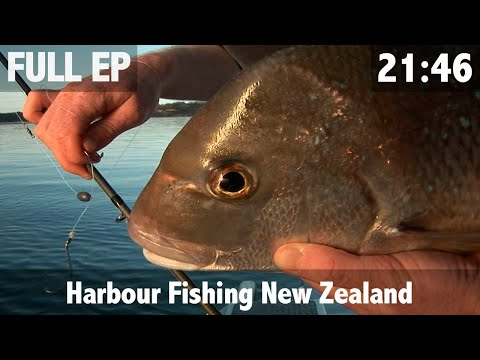 Harbour Fishing New Zealand