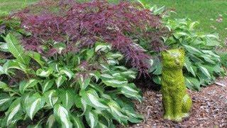 In The Garden - How To Divide Hostas