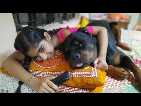 A day with my dog rottweiler||funny dog videos|cute dog|trained dog.