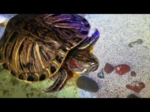 SeaQuest Interactive Aquarium - VIDEO TOUR (Las Vegas, Nevada)