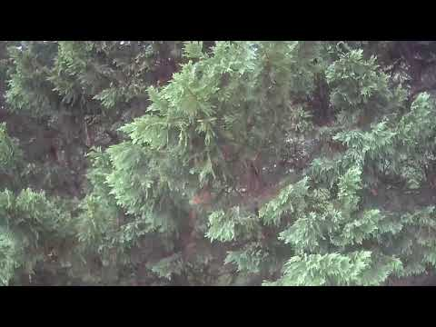 raw--last-look-for-the-x7-drone-in-the-dividing-bushes-on-the-property-line