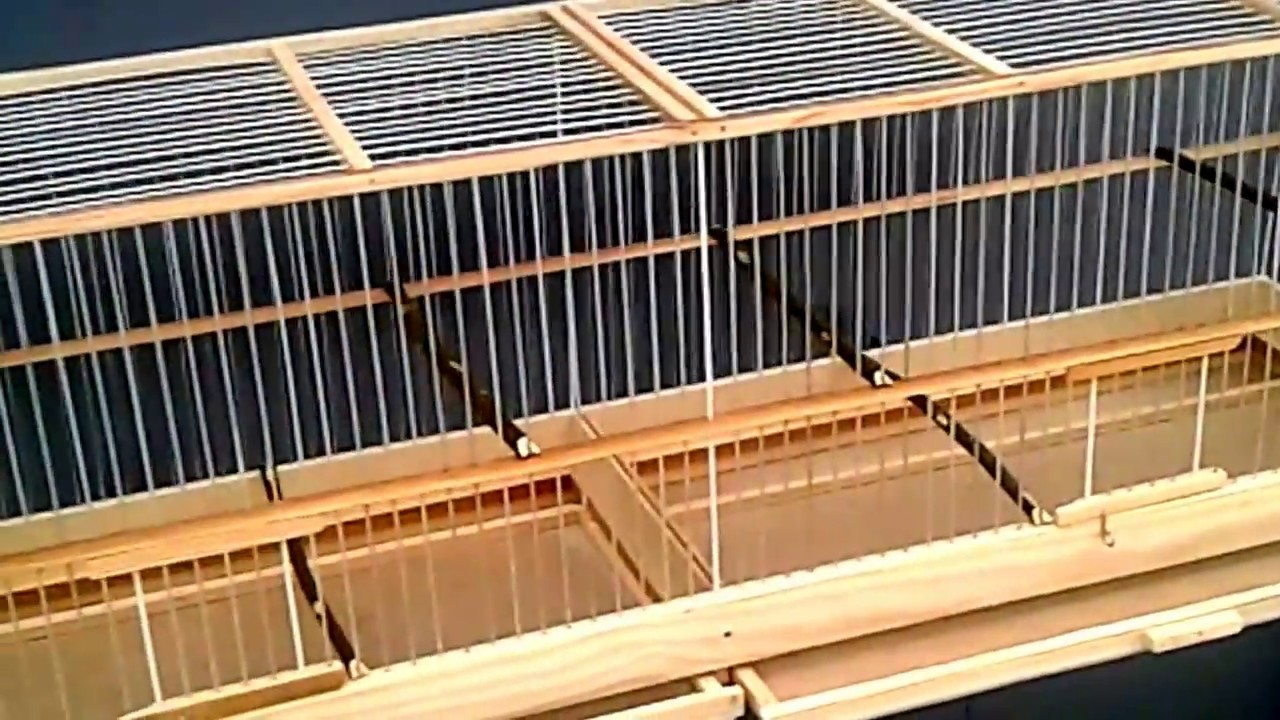 Клетки для крупных птиц, попугаев, канареек в москве в зоомагазине puzoo. В нашем интернет-магазине более 12000 наименований зоотоваров. Корма премиум класса от ведущих производителей. Товары для грызунов в москве по выгодным ценам, доставка.