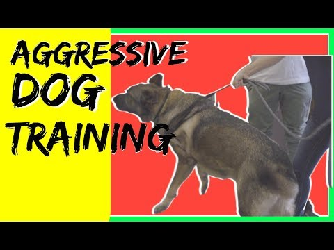 How to train a aggressive German Shepherd- reactive german shepherd training