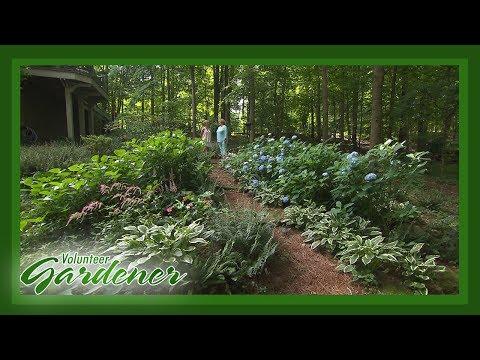Shade Garden | Volunteer Gardener