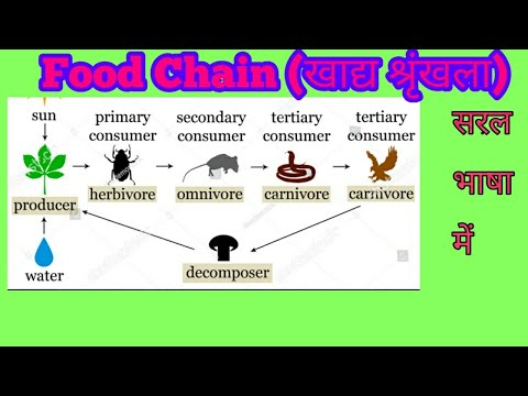 Food Chain in Hindi// Environment & Ecology// Producers, Consumers & Decomposers //Lokendra Mishra