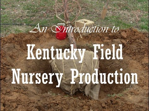 An Introduction to Kentucky Field Nursery Production