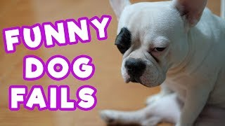 25 Funniest Dog Fails Of All Time | Funny Pets Compilation | #thatpetlife