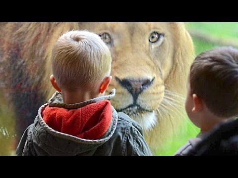 Kids At The Zoo Compilation NEW