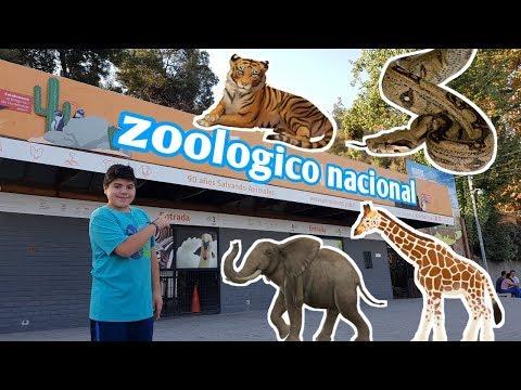 Visitando el Zoologico Metropolitano, santiago de chile