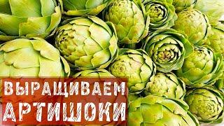 ФАЗЕНДА - 2015.03.01 - Фрагмент 101.