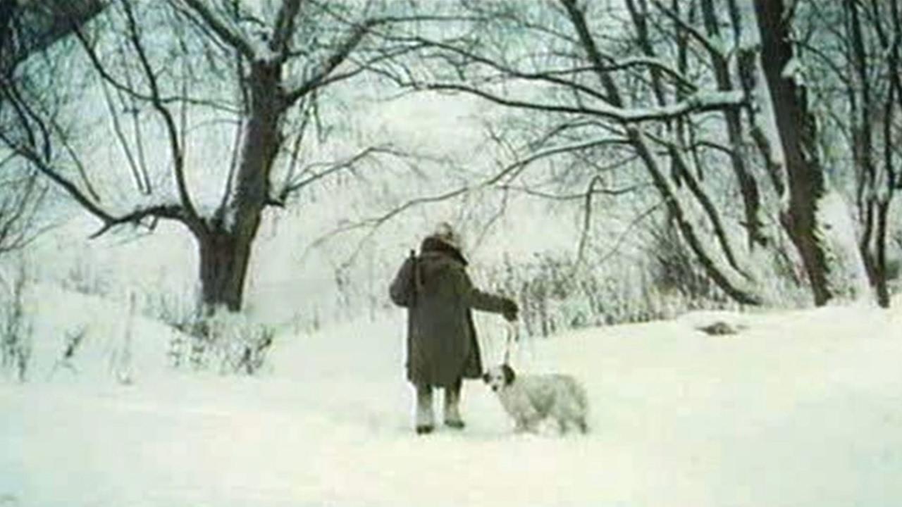 Белый Бим Чёрное ухо, Гавриил Троепольский #1 аудиосказка онлайн с картинками слушать