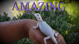 Dragon names video clip