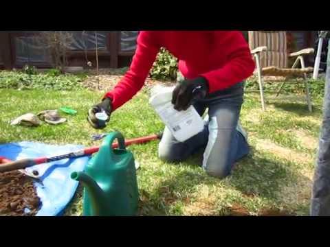 Planting Apple Trees - Wisconsin Garden Video Blog 490