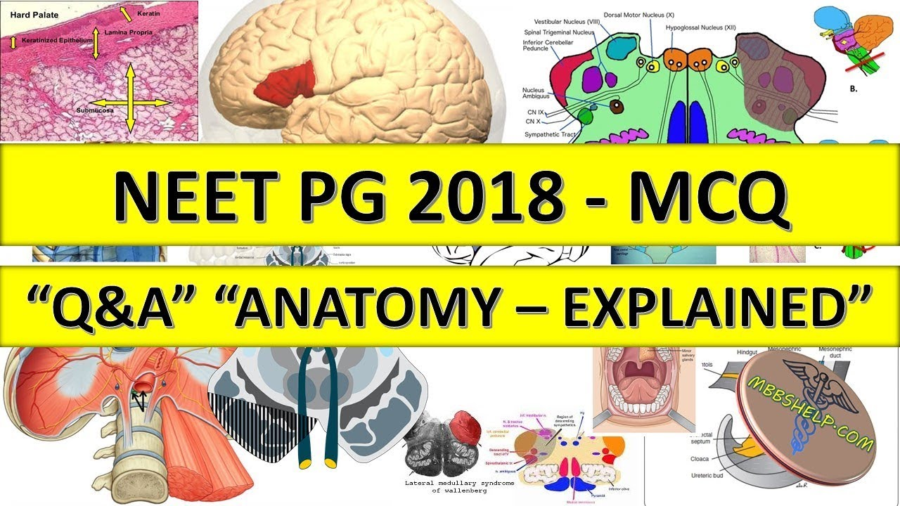Neet Pg 2018 Anatomy Mcq Qa With Explanation Youtube