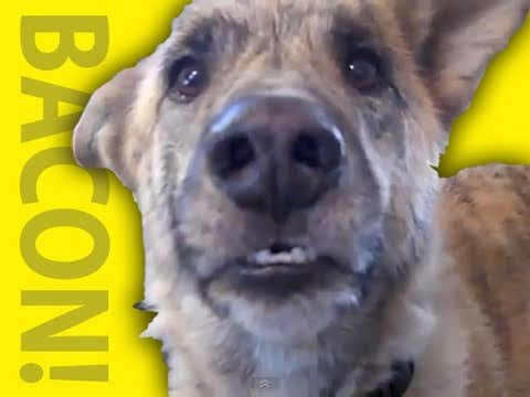 Talking Dog Wants Food Video
