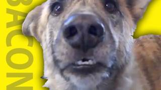 Repeat youtube video Ultimate Dog Tease
