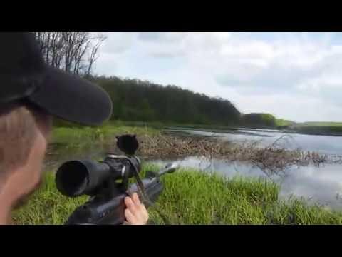 охота  с пневматикой  на утку хатсан 125  hunting with airguns for a duck