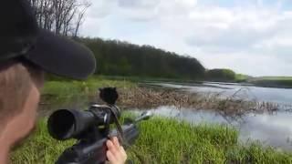 Охота на уток с пневматической винтовкой видео