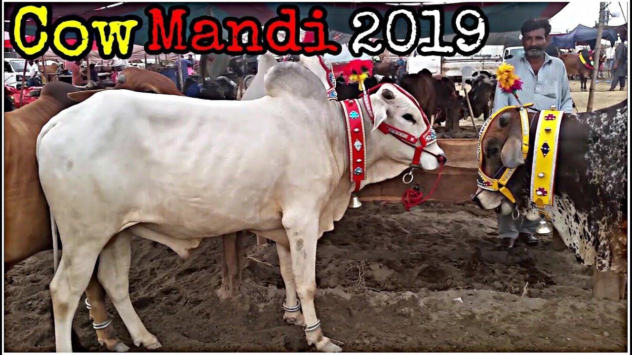 Rates of Most Beautiful Cow for Qurbani 2019  Eid ul Adha 2019  Bakra Eid in Pakistan 2019