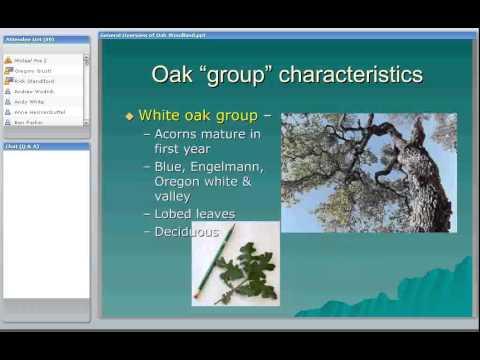 Overview of Oak Woodlands in California