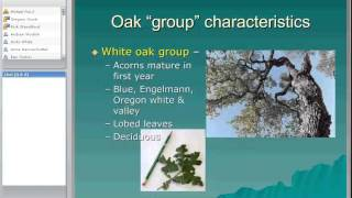 Overview of Oak Woodlands in California
