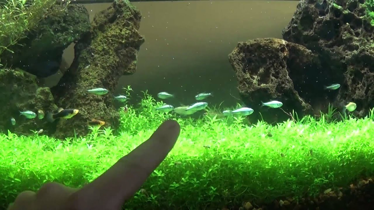 Best DIY Planted Aquarium LED lighting - YouTube