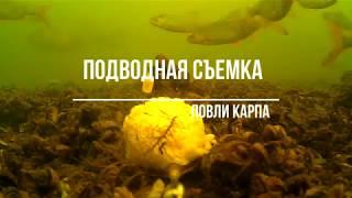 Подводная съемка ловли карпа на флэт или почему не клюет и кто съел прикормку)