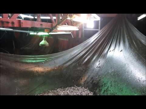 Lift Net (Bagan Apung) In Krueng Raya, Aceh Besar