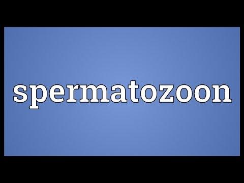 Spermatozoon Meaning