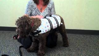 Measuring Your Dog For A Life Vest