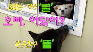 """진돗개 겁없는 '별'과 축구 선수? '뜰', """"…"""